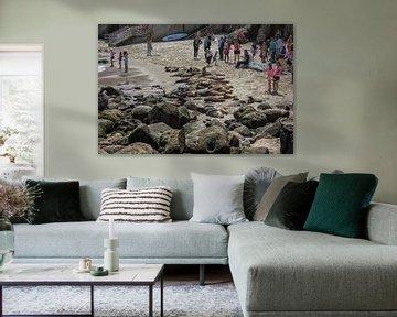 La Jolla Strand San Diego, Kalifornien USA mit Menschen und Seelöwen im Sommer von Mohamed Abdelrazek