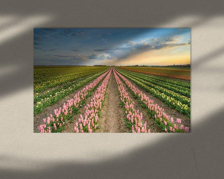 Sfeerimpressie: Zonsondergang in een tulpenveld van Michael Valjak