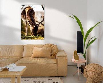 Naturfotografie - Hirsche von Michiel de Bruin