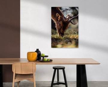 Naturfotografie - Rotwild Nahaufnahme von Michiel de Bruin