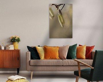 botanische kunst, macrofoto van de kronkelhazelaar van Karijn | Fine art Natuur en Reis Fotografie