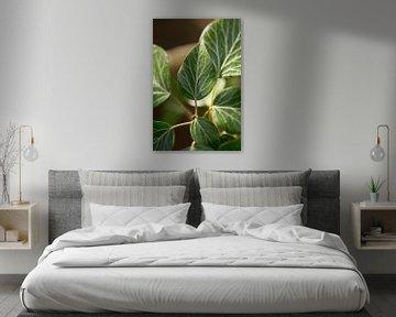botanische Fotografie einer grünen Pflanze von Karijn | Fine art Natuur en Reis Fotografie