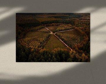"""""""De Eenzame Eik"""" vanuit de lucht, Nederland van Michiel de Bruin"""