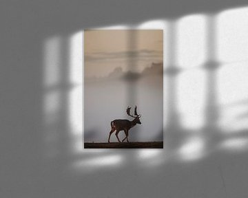 Hirsche im Morgennebel von Michiel de Bruin
