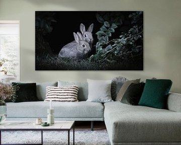 Europäisches Kaninchen von Maurice Cobben