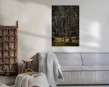 Bomen met prachtig licht