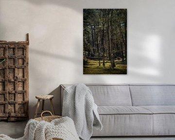 Bomen met prachtig licht van Steven Dijkshoorn