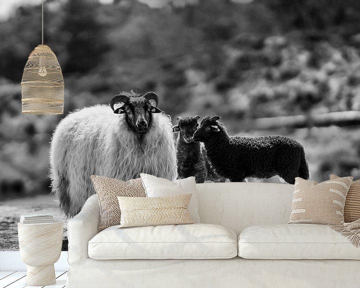 Beispiel fototapete: Schafe und Lämmer in Schwarz und Weiß von Steven Dijkshoorn
