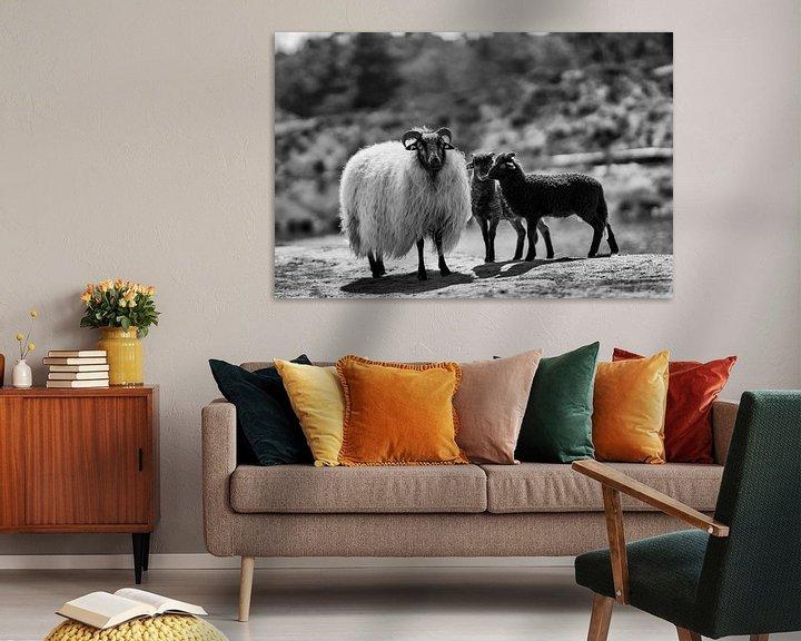 Beispiel: Schafe und Lämmer in Schwarz und Weiß von Steven Dijkshoorn