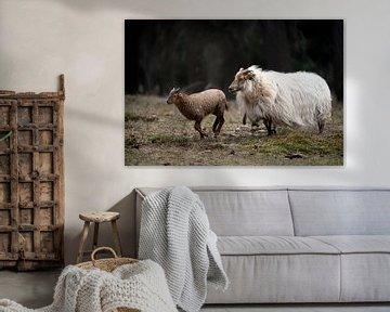Schaf mit ihrem Lämmchen von Steven Dijkshoorn