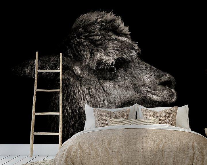 Beispiel fototapete: Alpaka in Farbe mit schwarzem Hintergrund von Steven Dijkshoorn