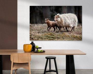 Schaf mit Lamm in der Natur von Steven Dijkshoorn