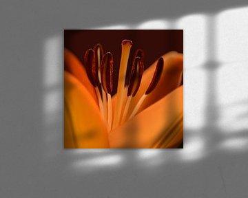 Lilie von Violetta Honkisz
