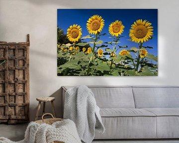Zonnebloemen in Frankrijk von Arie Storm