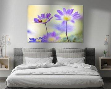 Marienkäfer auf lila Anemonen von Teuni's Dreams of Reality