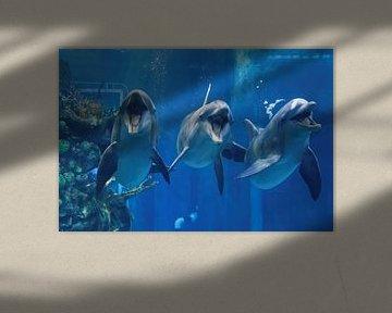 Drei Delphine, die im Aquarium schwimmen und mit offenem Maul zu Ihnen schauen - Nahaufnahme von Mohamed Abdelrazek