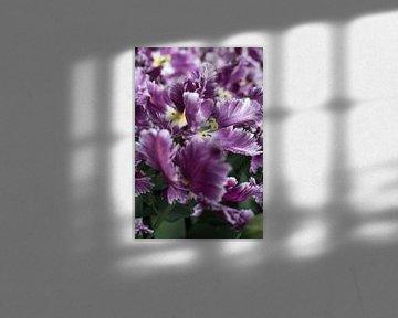 Extravagante Tulpe von Lisette van Gameren