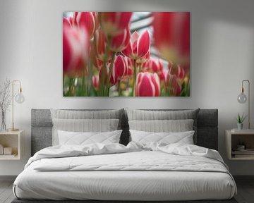 rood-witte tulpen van Lisette van Gameren