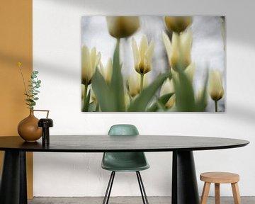 Hellgelbe Tulpen von Lisette van Gameren