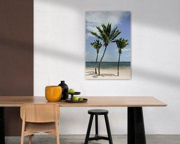 Palmbomen | Key West| Florida | Reisfotografie | Strand van Mirjam Broekhof