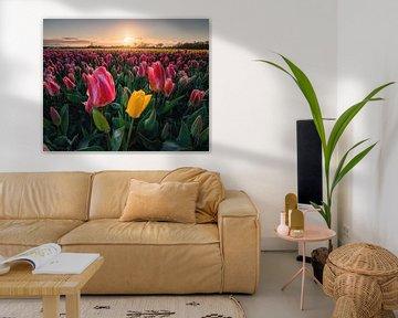 Schöne Tulpen bei Sonnenaufgang. von Nick de Jonge - Skeyes