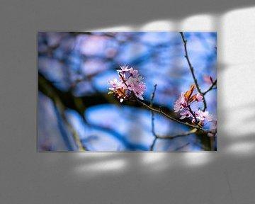 Bomen in bloei van Inge van der Stoep