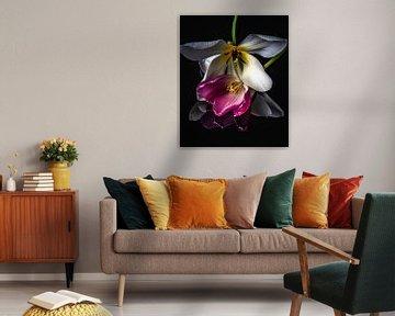 Tulpen von Jolanda Bosselaar