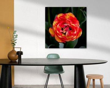 Flower Power von Anouk Snijders