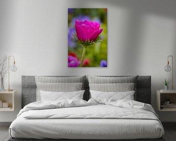 Hübsch in Rosa von Anouk Snijders