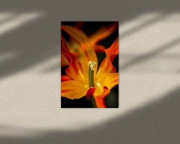 Flammenwerfer von Anouk Snijders