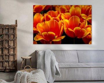 Meer aus Orange von Anouk Snijders