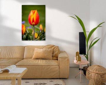 Tulpe von Anouk Snijders