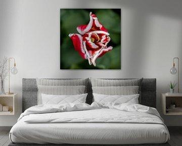 Blume von Anouk Snijders