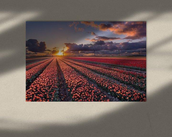 Sfeerimpressie: Zonsondergang boven de tulpenvelden in Flevoland van Fotografie Ronald