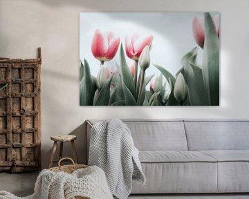 Rosa Tulpen von Melissa Peltenburg