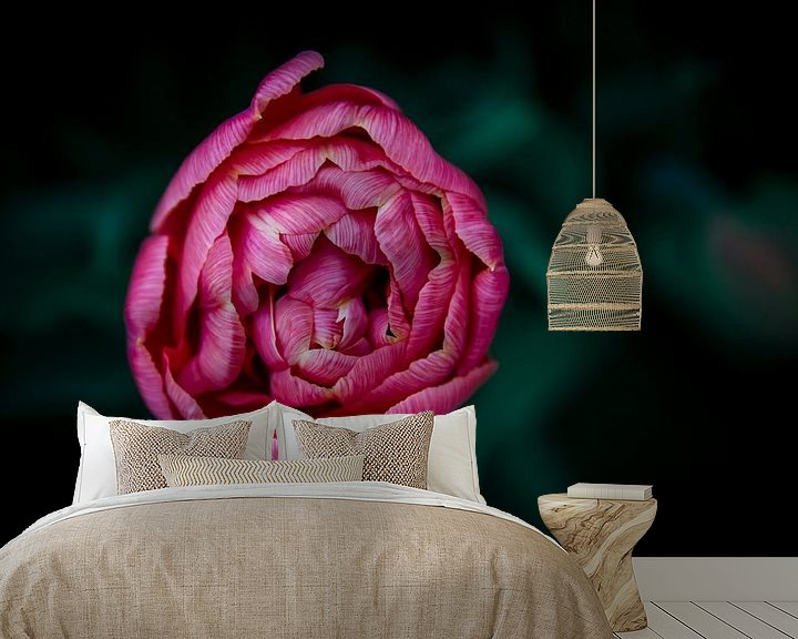 Impression: Fleur rose sur shanine Roosingh