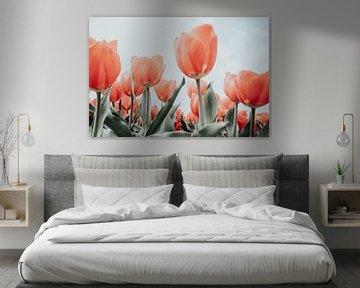 Rote Tulpen von Melissa Peltenburg