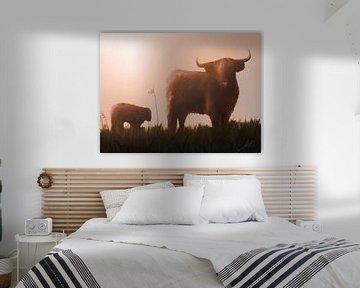 Schottische Highlander Kuh und Kalb im Sonnenuntergang von Emiel de Lange