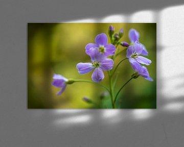 Whitflower in der freien Natur. von GiPanini