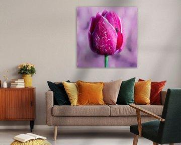 Schöne rosa Tulpe auf einem rosa Hintergrund. von GiPanini
