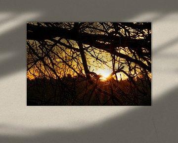 Sonnenaufgang Dwingelderveld Drenthe (Die Niederlande) von Marcel Kerdijk
