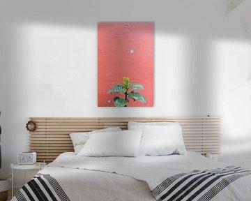 Grüne Pflanze gegen rote Wand von Robin Polderman