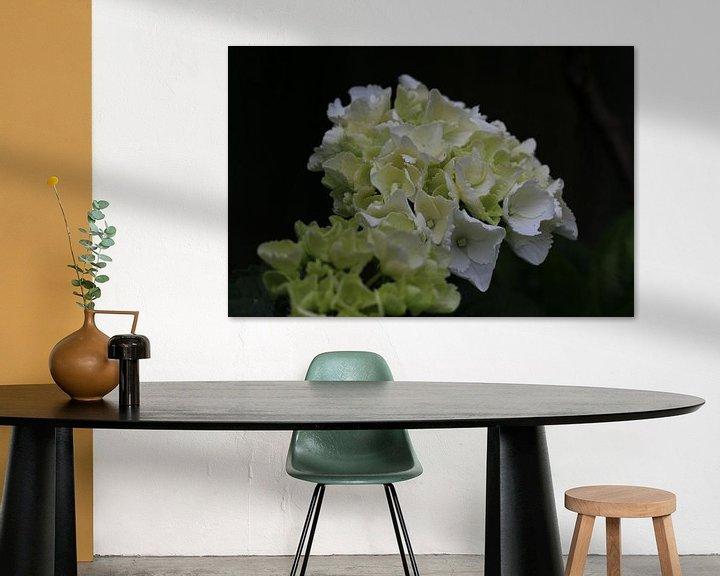 Sfeerimpressie: Witte bloem close-up van Paul Franke