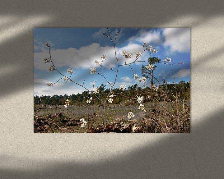 Beispiel: Blüte im Wald von M de Vos