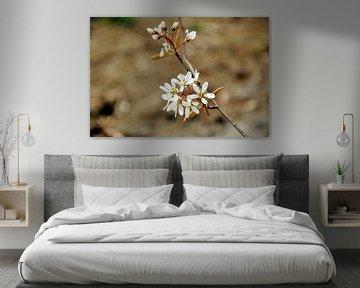 Blüte Nahaufnahme von M de Vos