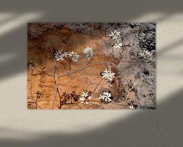 Blüte vor einem Hintergrund aus erdigen Farben von M de Vos