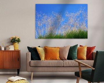 Bloeiende grassen in het zonlicht van Folkert Jan Wijnstra