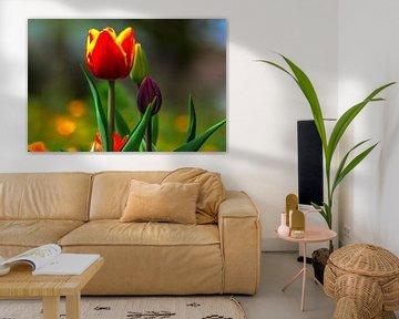 Blühende Tulpen von Michael Nägele