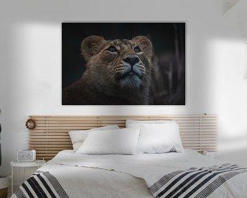 Nahaufnahme Porträt der schönen Löwin von Jesper Stegers