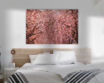 Kirschblüte in Bonn von Jiri Viehmann